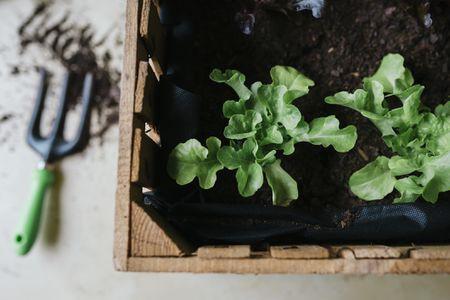 GrowShop uprawa24.pl - specjalistyczny sklep ogrodniczy